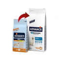 Affinity Advance-Adulte Grandes Races (2)