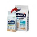 Affinity Advance-Chiot Grandes Races (2)