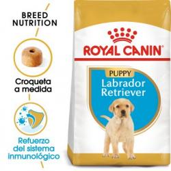 Labrador Retriever Chiot (6)