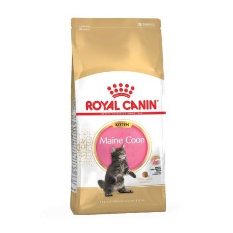 Royal Canin-Chaton Maine Coon (1)