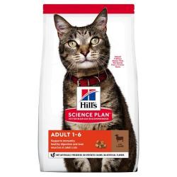 Hills-SP Feline avec Agneau (1)