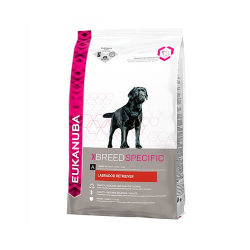 Labrador Retriver Adulte (6)